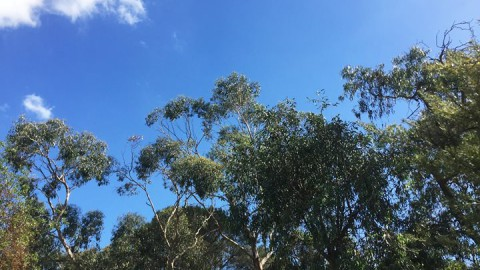 Blue skies…nothing but blue skies from now on! Let's have a garden wedding!