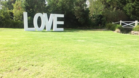 LOVE is in the air – well on the lawn actually. Blue skies and beautiful blooms….